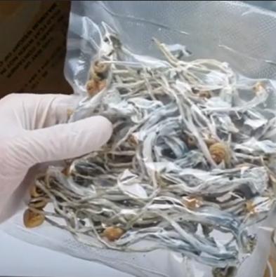 Almacenar de hongos mágicos