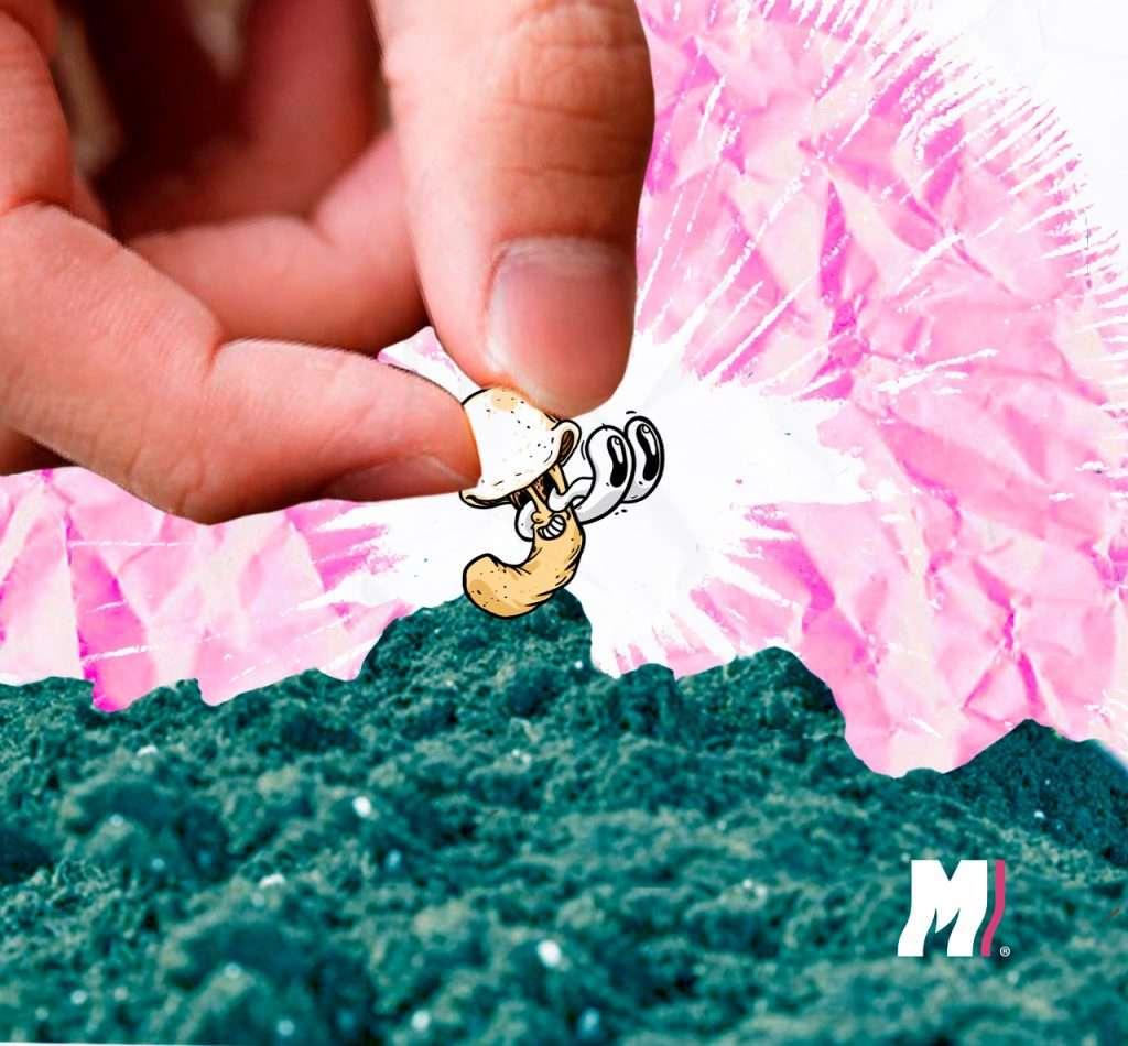 Cómo cultivar hongos mágicos