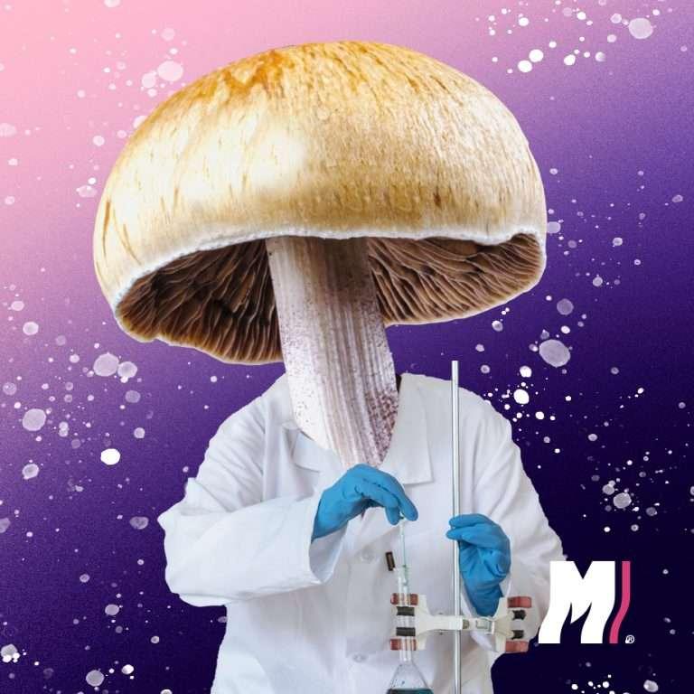 efecto de hongos alucinógenos